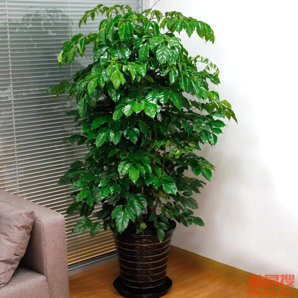 室内绿植花卉租摆怎么收费?
