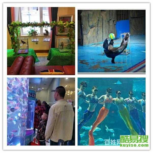唐山市哪里有出租企鵝展覽的  百鳥展租賃