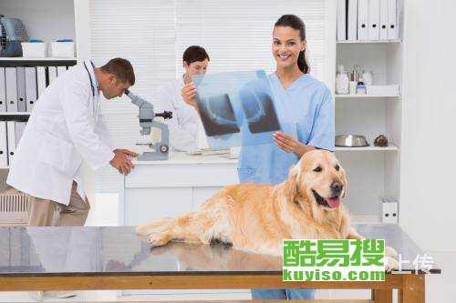 深圳市福田華強南寵物醫院寵物急救